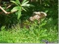 sized_iguana-iguana